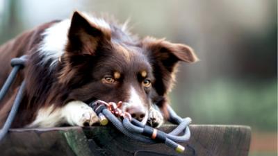 """STRATO Webshop Fördehund: """"Heute kommt jeder mit einem Online-Shop klar!"""""""